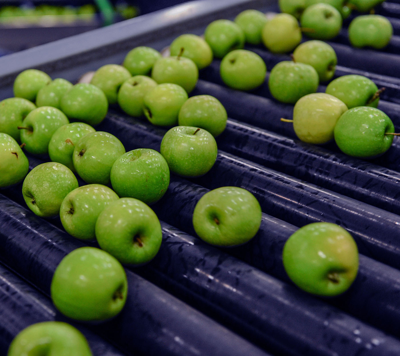 Apples on manufacturing production line